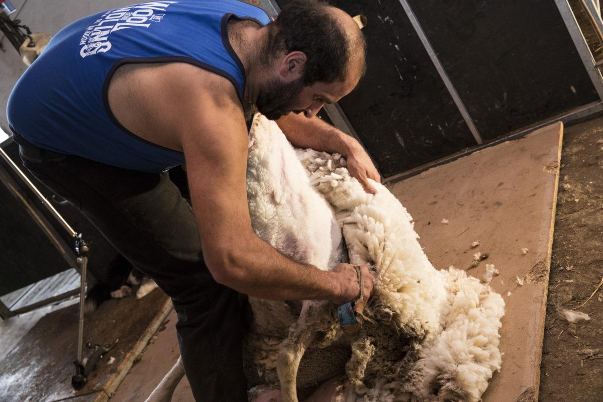 ShearingTShirts joseba 1